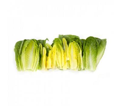 Квинтус - салат Ромэн, 1 000 и 5 000 семян (драже), Rijk Zwaan/Райк Цваан (Голландия), фото 4