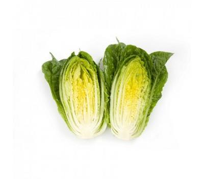Квинтус - салат Ромэн, 1 000 и 5 000 семян (драже), Rijk Zwaan/Райк Цваан (Голландия), фото 5
