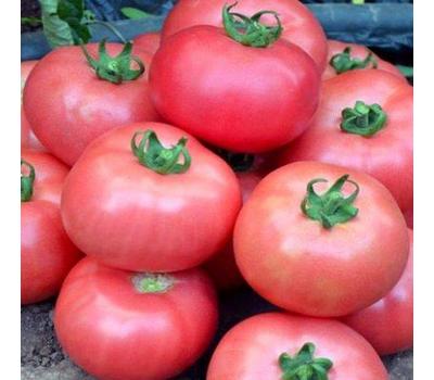 Турмалин - семена томатов, Гавриш/Gavrish (Россия), фото 2