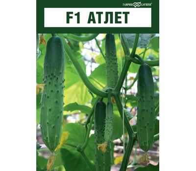 Атлет F1 - семена огурца пчелоопыляемого, Гавриш/Gavrish (Россия), фото 4