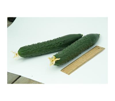 Тайгерс F1 - семена огурца партенокарпического, 1 000 семян, Гавриш/Gavrish (Россия), фото 4