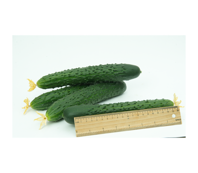 Ярый F1 - семена огурца партенокарпического, 1 000 семян, Гавриш/Gavrish (Россия), фото 2