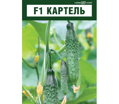 Картель F1 - семена огурца пчелоопыляемого, 1 000 семян, Гавриш/Gavrish (Россия), фото 3
