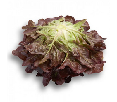 Ксерафин - салат дуболистый, 1 000 и 5 000 семян драже, Rijk Zwaan/Райк Цваан (Голландия), фото 3