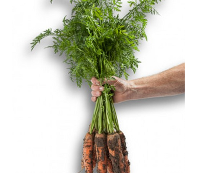 Морелия F1 - семена моркови, Rijk Zwaan/Райк Цваан (Голландия), фото 3