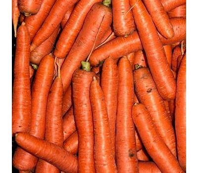 Морелия F1 - семена моркови, Rijk Zwaan/Райк Цваан (Голландия), фото 4