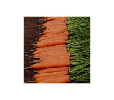 Монанта - семена моркови, Rijk Zwaan/Райк Цваан (Голландия), фото 2