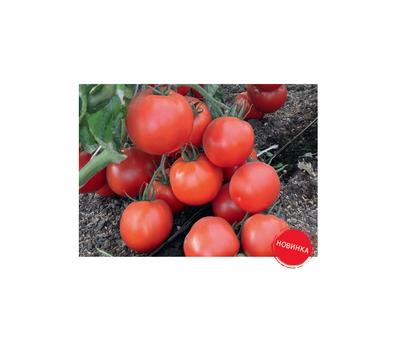 Премьера - семена томатов, 100 и 1 000 семян, Гавриш/Gavrish (Россия), фото 3