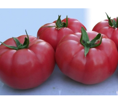 Розарио F1 - семена томатов, Гавриш/Gavrish (Россия), фото 2