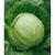 Пандион F1 - капуста белокочанная, 2 500 семян, Seminis/Семинис (Голландия), фото 1