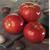 Белла Росса F1 - семена томатов, 1 000 семян, Sakata seeds/Саката сидз (Япония), фото 1
