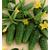Амур F1 - огурец партенокарпический,  50, 250 и 1 000 семян, Bejo/Бейо (Голландия), фото 1