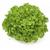 Кук - салат дуболистый, 1 000 и 5 000 семян (драже), Rijk Zwaan/Райк Цваан (Голландия), фото 1