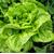 Квинтус - салат Ромэн, 1 000 и 5 000 семян (драже), Rijk Zwaan/Райк Цваан (Голландия), фото 1
