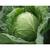 Сир F1 - семена капусты белокочанной, 2 500 семян, Clause/Клаус (Франция), фото 1