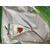 Абако F1 - семена моркови, 1 000 000 семян, (фр. от 1,6 до 2,0 и выше), Seminis/Семинис (Голландия), фото 2