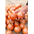 Семена лука Ретона F1 (Эталон), фото 6