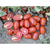 Тейлор F1 - томат для переработки, 1 000 и 5 000 семян, Nunhems/Нунемс (Голландия), фото 2
