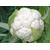 Гивонт F1 - семена капусты цветной, 2 500 семян, Seminis/Семинис (Голландия), фото 1