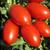 Санмино F1 - томат процессинг, 2 500 семян, Syngenta/Сингента (Голландия), фото 1