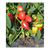 Кубано F1 - семена перца сладкого, Гавриш/Gavrish (Россия), фото 1