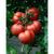 Шибик F1 - семена томатов, 100 и 1 000 семян, Гавриш/Gavrish (Россия), фото 1