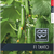 Танто F1 - семена огурца партенокарпического, 100 и 1 000 семян, Гавриш/Gavrish (Россия), фото 2