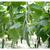 Ярый F1 - семена огурца партенокарпического, 1 000 семян, Гавриш/Gavrish (Россия), фото 3