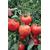 Хабль F1 - семена томатов, Гавриш/Gavrish (Россия), фото 1