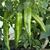 Кортик F1 - семена перца острого, Гавриш/Gavrish (Россия), фото 1