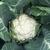 Опаал F1 - семена капусты цветной, Rijk Zwaan/Райк Цваан (Голландия), фото 3