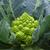Пунтоверде F1 - капуста цветная, 1 000, 2 500 и 10 000 семян, Rijk Zwaan/Райк Цваан (Голландия), фото 2