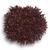 Триплекс - салат Саланова, 1 000 и 5 000 семян драже, Rijk Zwaan/Райк Цваан (Голландия), фото 1