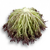 Винтекс - салат Саланова, 1 000 и 5 000 семян драже, Rijk Zwaan/Райк Цваан (Голландия), фото 3